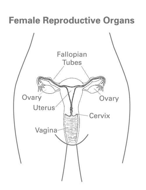 Sexual female anatomy